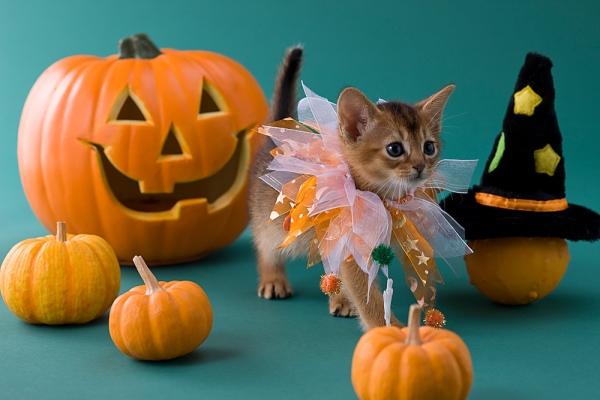 Halloween Kitten Costume