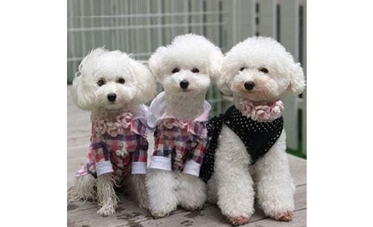 Japanese Pet Fashion