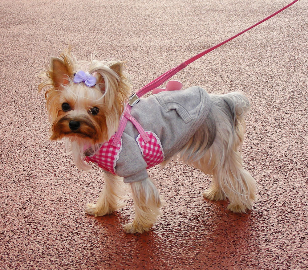 Dogs clothes online shopping